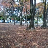 目の前の公園も紅葉中(^^)