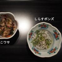 愛媛県-松山市🍊