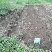 枝豆を少々収穫。ほうれん草と人参、パクチーの種を蒔きました