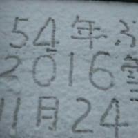 11月の雪⛄