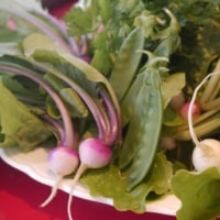 春の野菜が芽生えはじめたよ!