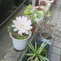 自宅の花・・・・