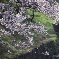 サクラの開花を待ちながら。-バボラーク・アンサンブル演奏会-