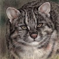 Wild Cat Ⅱ