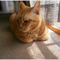 カメラ嫌いのモフ猫