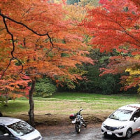 松島・扇谷 紅葉