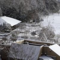 雪景色の中央公園