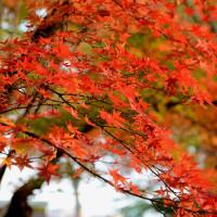浮間公園の紅葉