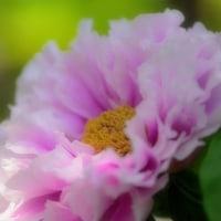 筥崎宮花庭園からp5(D810,マクロ105mm)
