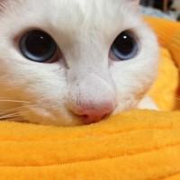 愛猫がお星さまになりました。