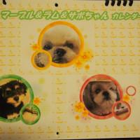 写真入りのカレンダー、素敵