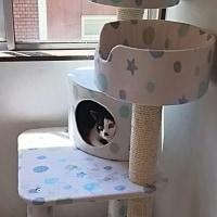 猫のペットホテルの年末年始の予約、今日も頂きました♪