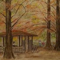 宝ヶ池の紅葉(メタセコイア)