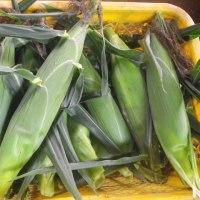 ブルーベリー収量上がらず、、スイートコーン収穫始める