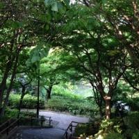 6月15日(木)のつぶやき