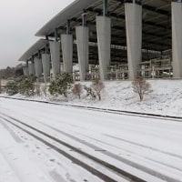 シェイラー、雪がすごかったね