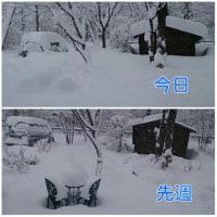 またまた大雪です