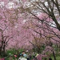 花盛りの京都旅(2日目)