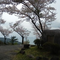 花見に太華山へ登る