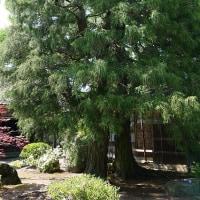 二宮家日本庭園
