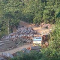 違法木材中国に大量流入 加工され日本や欧米にも