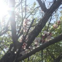 3月25日 活動報告 草刈りと藻とり