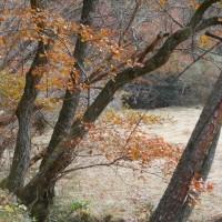 湿原2 池 水連の葉 (16-1204)