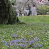 桜下の二人