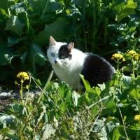 東中野の美猫