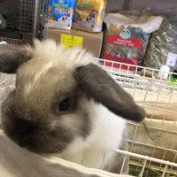 季節の変わり目、人もウサギも体調管理が大切です☆
