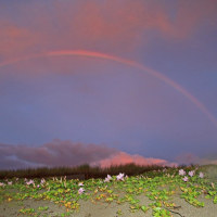日没後に虹