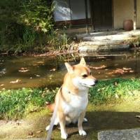 岡山ガーデン