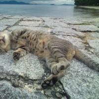 再会 琵琶湖のデカネコ