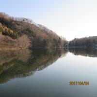 中綱湖の桜3