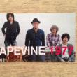「1977」 GRAPEVINE 2013年