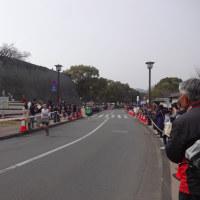 梅の花と熊本城マラソン
