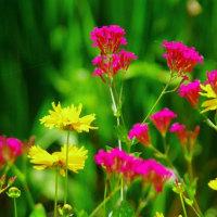 湖畔の花壇