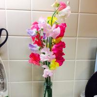 2・23・やっぱりお花はイイね