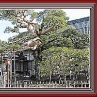 初弘法で円鏡寺と大根の福神漬け作り