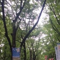 靱公園バラ祭 平成29年五月