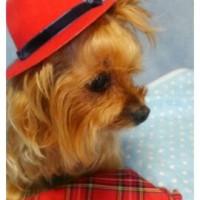ルルの帽子と洋服~