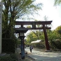 根津神社・ツツジはこれから