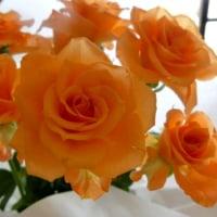 今日は薔薇買いに。。。