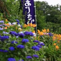 紫陽花寺1(金泉寺)