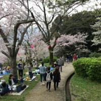 桜を見に☆