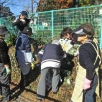 葉牡丹とパンジーの植え付け