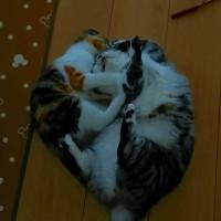 我が家のネコたち