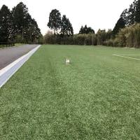 NEW公園