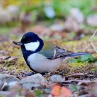 かわいい野鳥