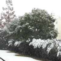 54年ぶりの早い初雪